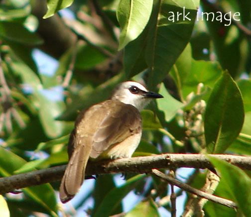 brown-bird.jpg
