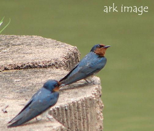 lil-birds.jpg