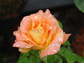 floral-21.jpg